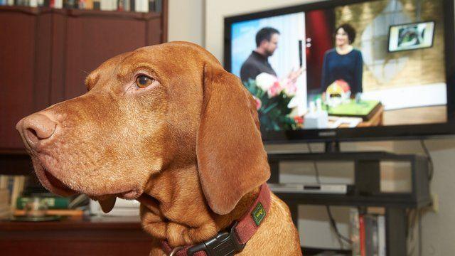 Wenn Haustierbesitzer für Schäden zahlen müssen Tiere