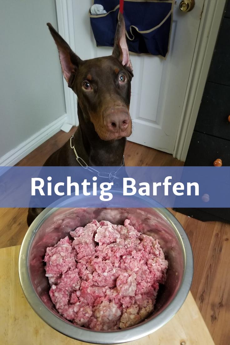 Barfen Fur Anfanger Top Tipps 2020 Mit Anleitung Rezepte Hunde Ernahrung Hundefutter Hundeernahrung