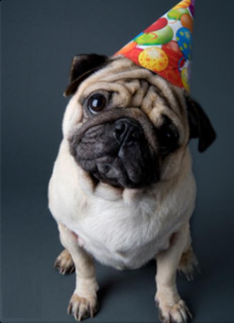 Awww A Pug Wearing A Birthday Hat He Look Sad Www
