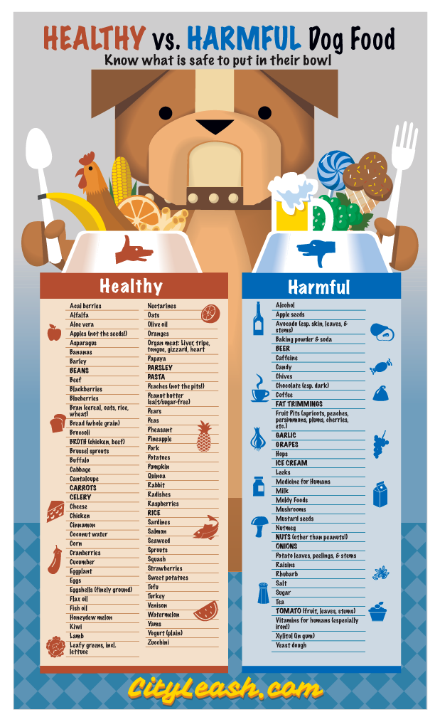 Providing A Healthy Diet For Your Dog Isn T Always So Obvious Most People Know The Obvious Dangers Lik Dog Food Recipes Healthy Dogs Healthy Dog Food Recipes