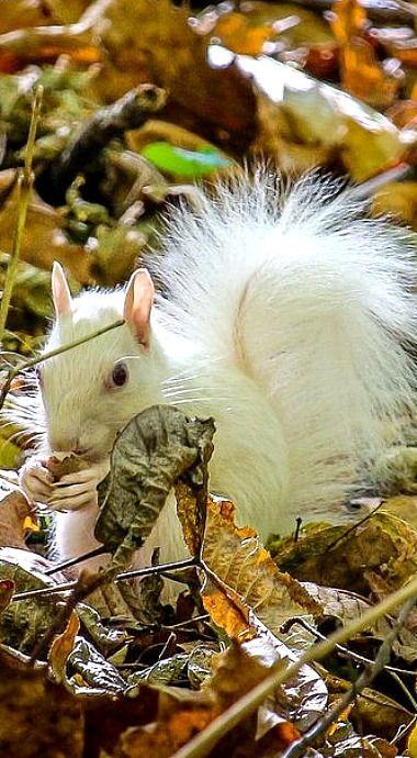 Photo of Albino Squirrel