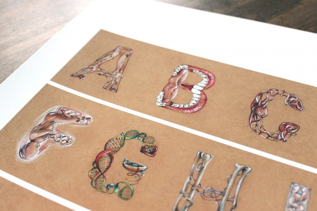 Human Anatomy Alphabet By Laura Facci Available At The Street