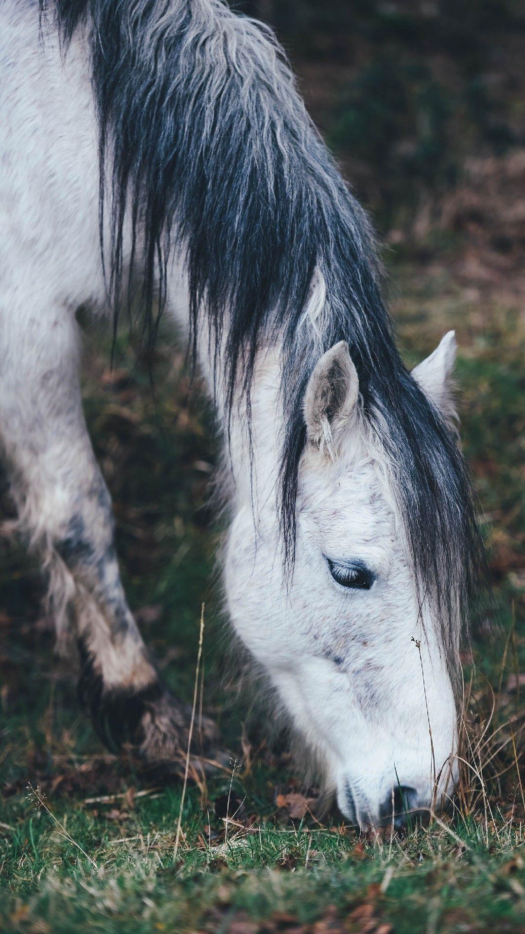 Horse Wallpaper Iphone 8