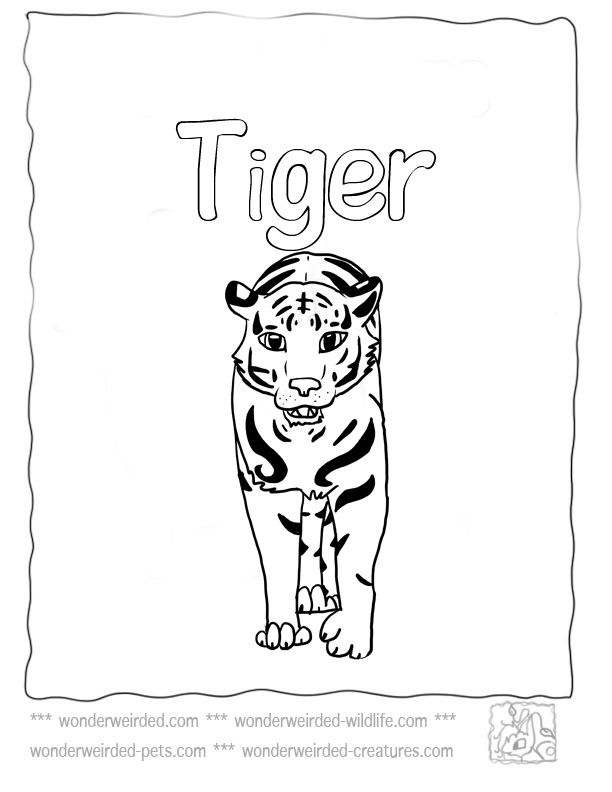 Tiger Coloring Pages at www.wonderweirded-wildlife.com