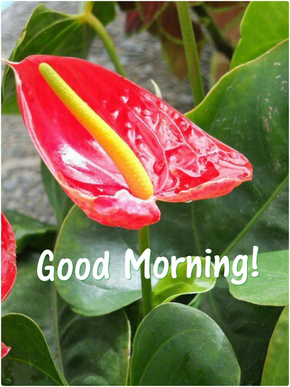 Pin By Anoop Patel On Good Morning Pinterest Flowers Tropical