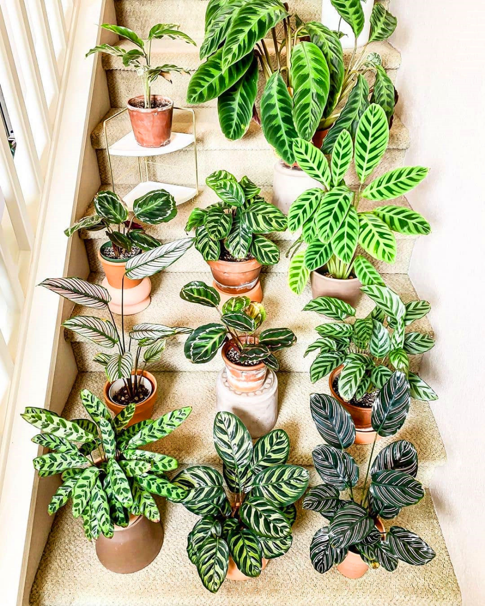 House Plants For Shady Rooms: 80 DIY Plant Stand Ideas To Fill Your Room With Greenery