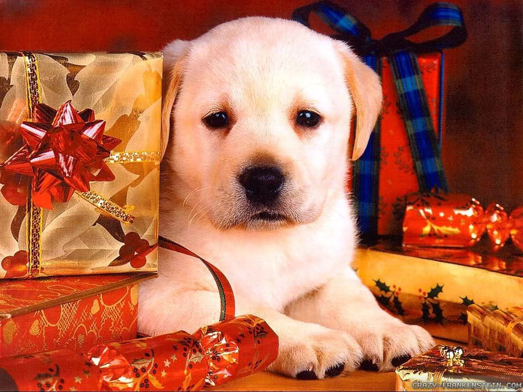 40 Wallpapers And Pictures Of Dogs Dog Pictures Christmas Dog Puppy Dog Photos