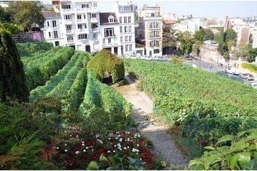 Le vignoble parisien : vue de Montmartre, qui accueille chaque année la fête des vendanges ! Retrouvez toute l'actualité et les évènements œnologiques sur paris http://www.vinotrip.com/fr/oenologie-paris