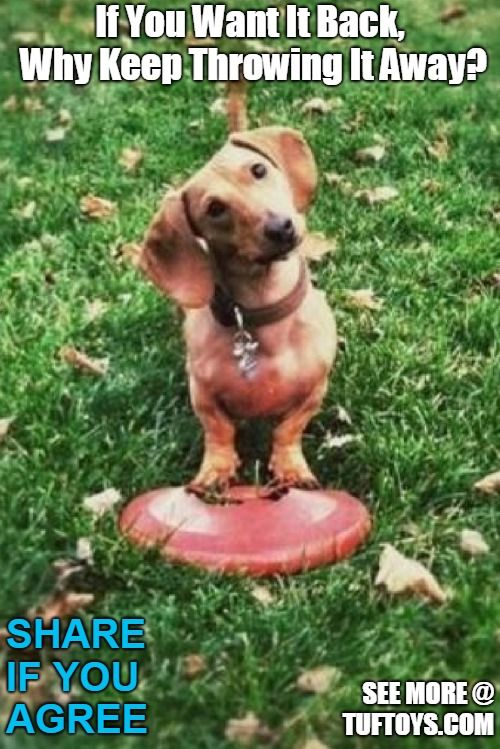 Funny Dog Memes Part  Funny Dog Memes Pinterest Funny Dogs Dogs And Funny Dog Memes