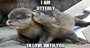 Cute Funny Memes For Him : Funny love memes for him for your girl memes