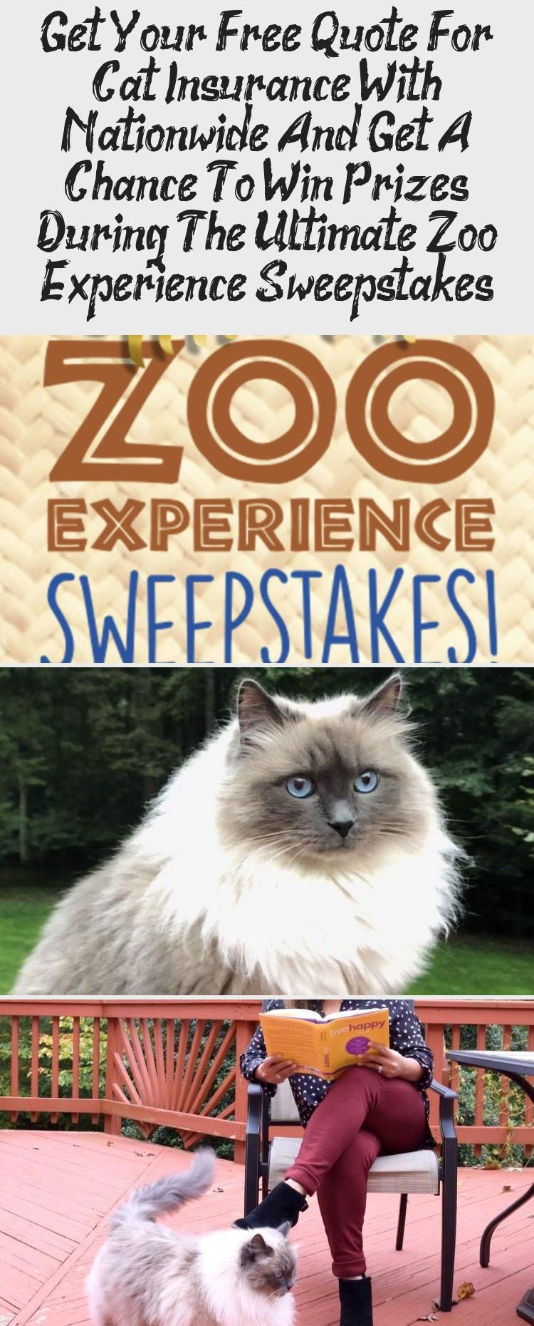 Get Your Free Quote For Cat Insurance With Nationwide And Get A Chance To Win Prizes During The Ultimate Zoo Experience Sweepstakes In 2020 Cat Insurance Cat Parenting Pet Insurance Quotes