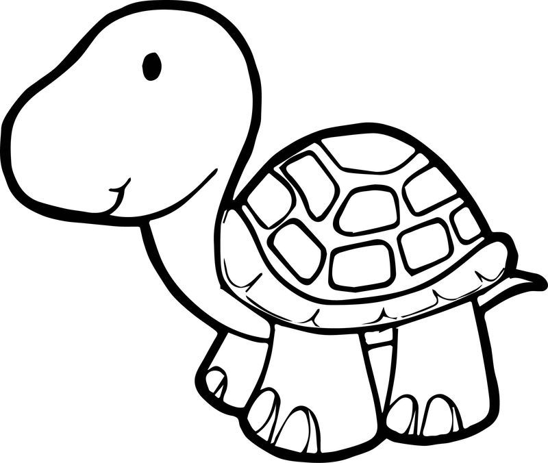 Just Tortoise Turtle Coloring Page Turtle Coloring Pages Animal Coloring Pages Bear Coloring Pages