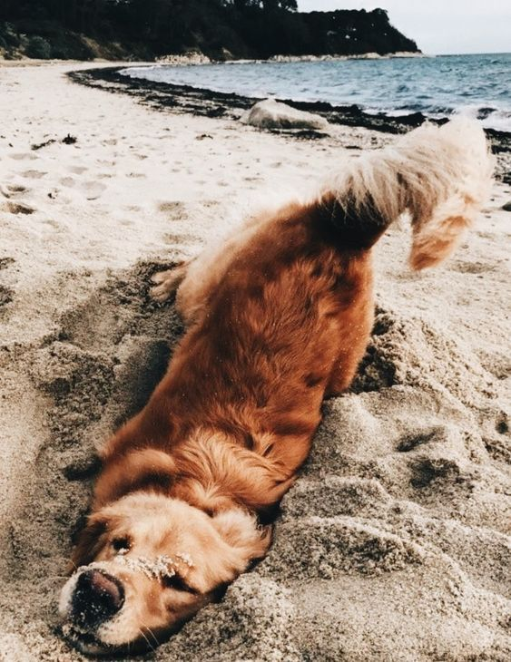 Swimsuits Tumblr Creatures Of My 3 Pinterest Dogs Pets And