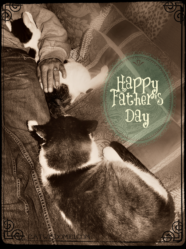 Caturday cat dads then and now lux the cat is rehomed cat dad cat lovers caturday cat dads then and now happy fathers day sciox Gallery