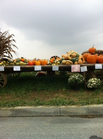 Roadside Wagon Lancaster County Pa Fall Thanksgiving Decor Amish Country Pennsylvania Pumpkin Stands
