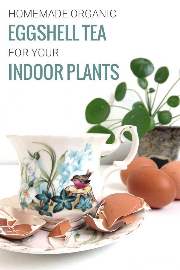 4 Ways to use Eggshells for your Plants | Plants, Egg ...