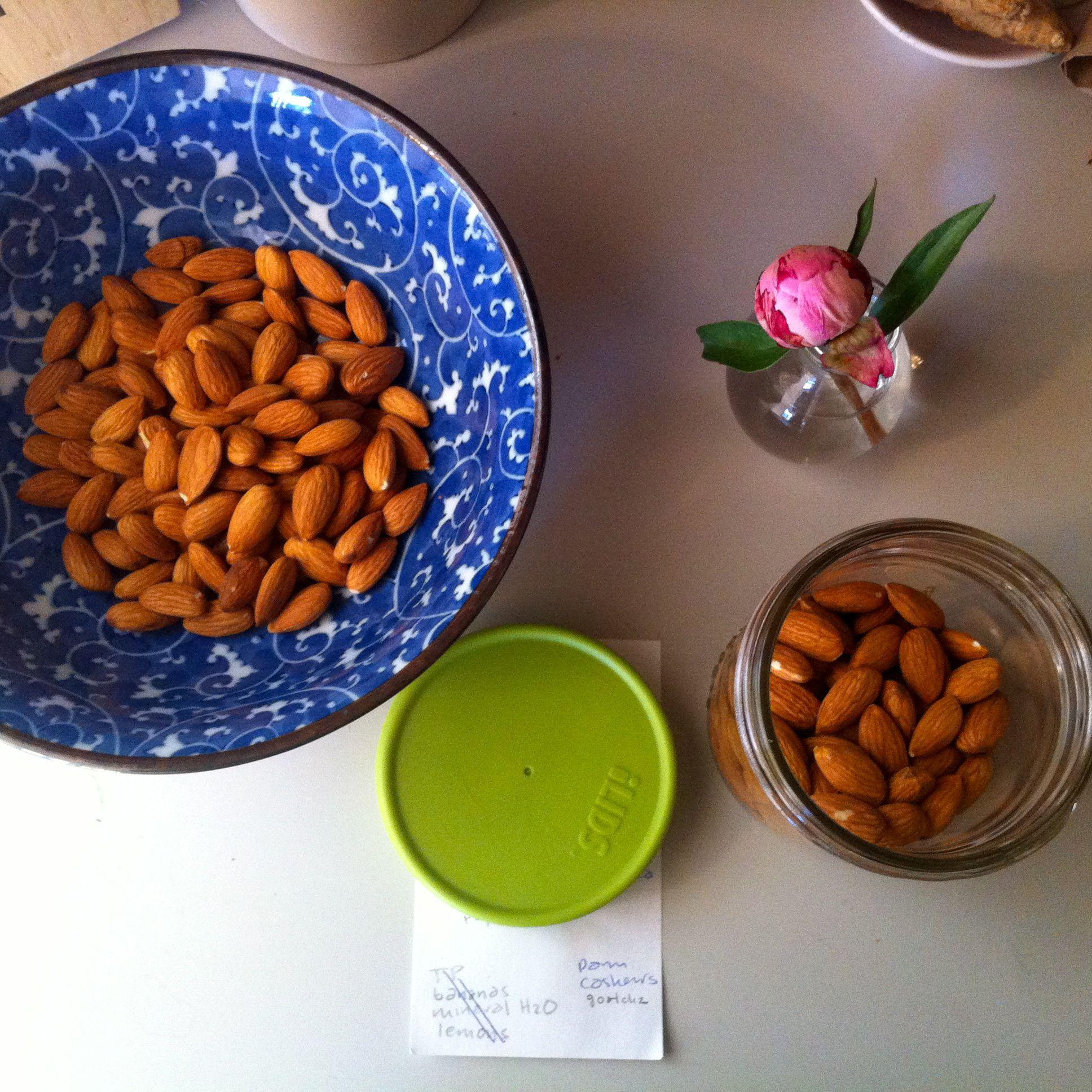 Almond Milk in mason jar   Dog food recipes, Food animals ...