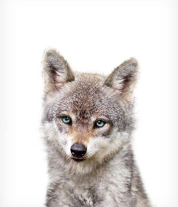baby woodland animals baby wolf print printable art