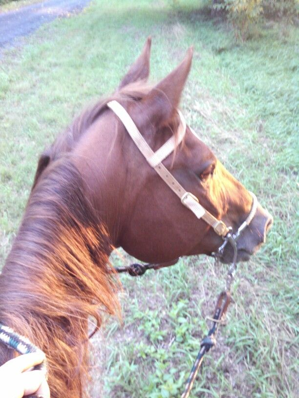 One of the best feelings ever! On my horse!