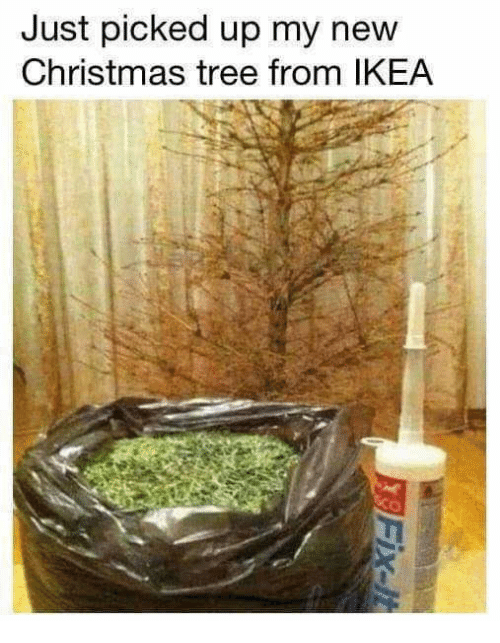 christmas tree memes Bing (With images) Christmas