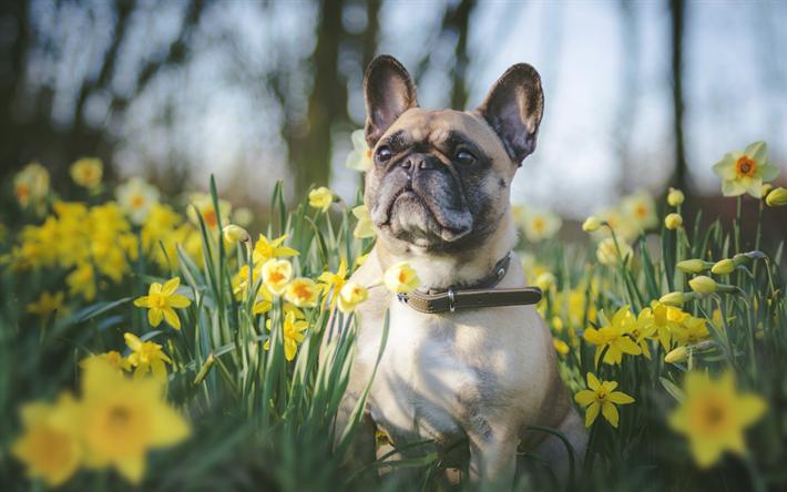 Resultado de imagen para Narcisos mascotas