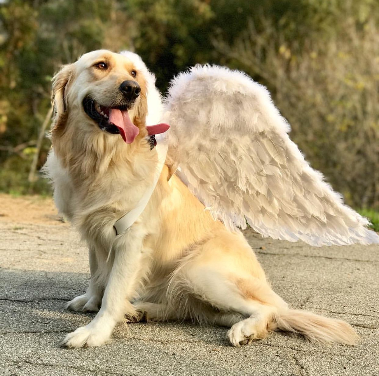 Happy birthday chica Dog rates, animals
