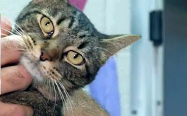 Texas animal shelter has a barn cat program that's an