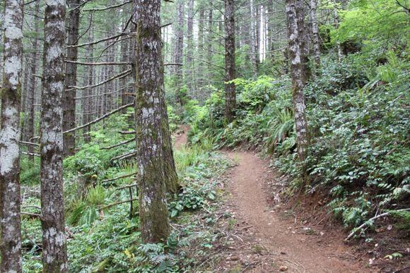 Mountain Biking Oregon Tillamook State Forest Mtb