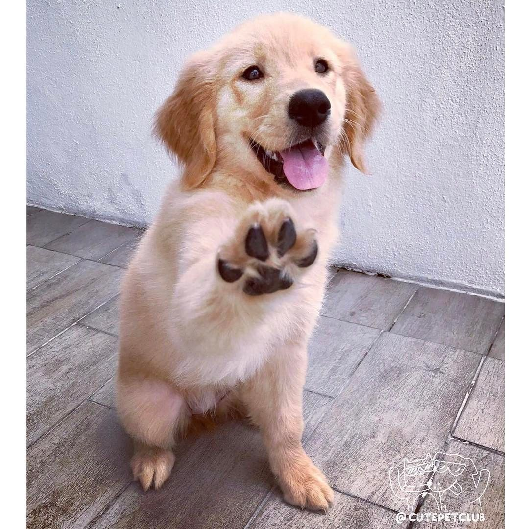 High Five Funnyanimals Pet Pets Cute Cute Dogs And Puppies Cute Animals Dog Cuddles