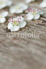 Zierliche Weißdornblüten auf altem Holz, Crataegus oxyacantha, weiße Frühlingsblüten, Grußkarte, Blumengrüße