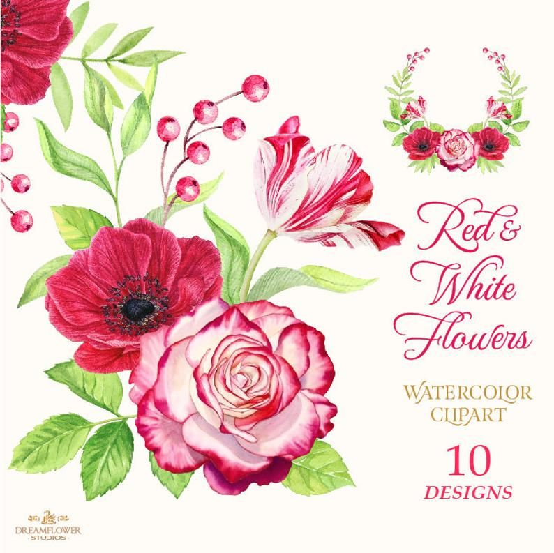 Watercolor Flower Clipart Red Red And White Red Flower Etsy Flower Clipart Watercolor Flower Illustration Watercolor Flowers