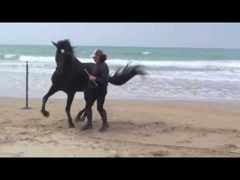 DOMA NATURAL EN LIBERTAD - YouTube