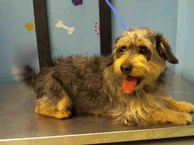 Urgent Max Houston Texas Petharbor Com Animal Shelter