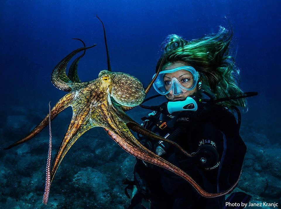 Octopus By/ Janez Kranjc www.svetronjenja-sdt.rs — with Ivana Orlovic. via Diving & Photography FB