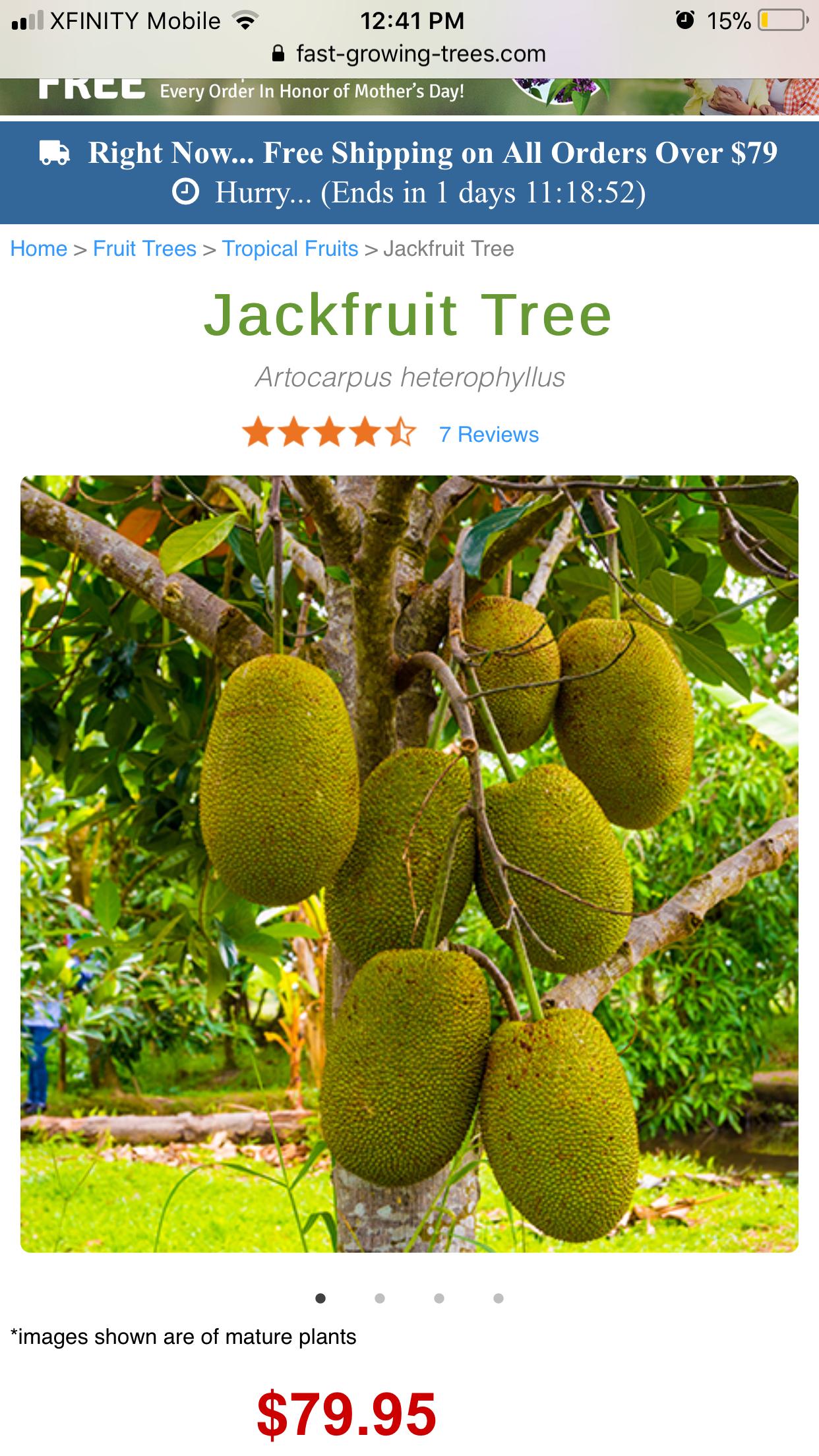 Pin By Melody Wong On Backyard Design Jackfruit Tree Fruit Trees Tropical Fruits