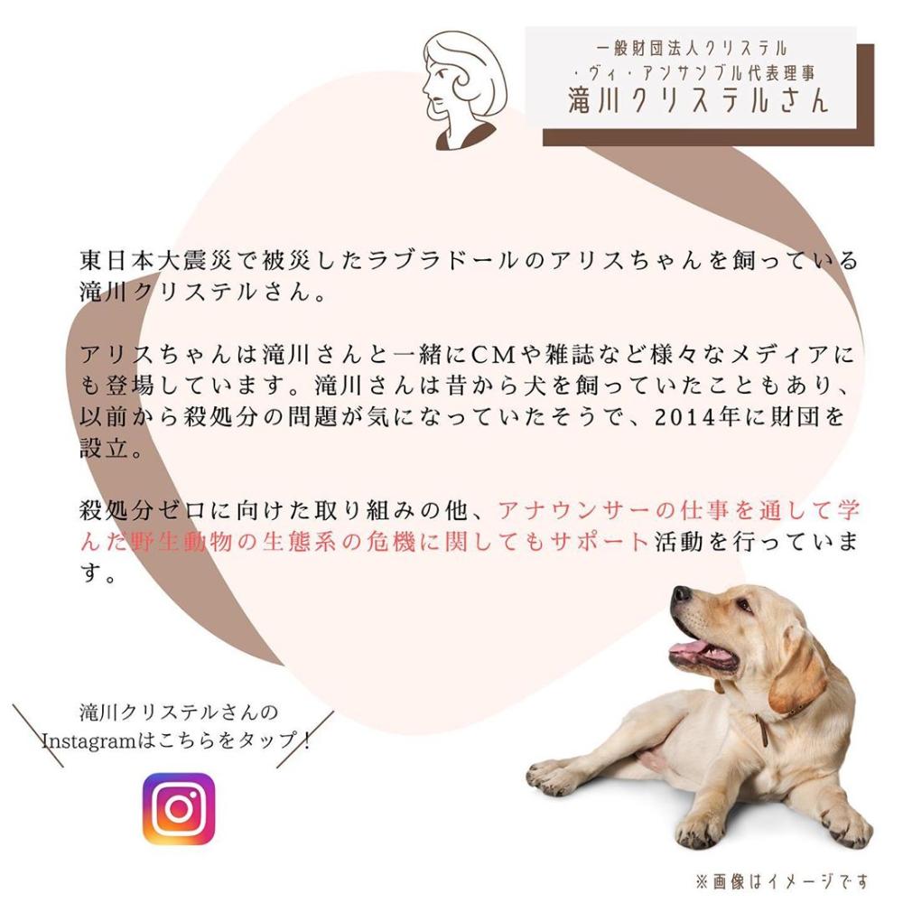 Inunavi公式アカウント Inunavi Instagram写真と動画