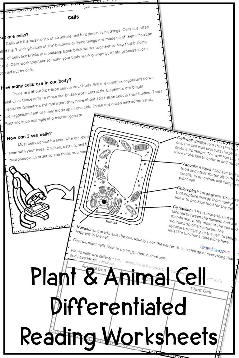 Plant And Animal Cell Activities Text Features Worksheet Differentiated Reading Activities Differentiated Reading