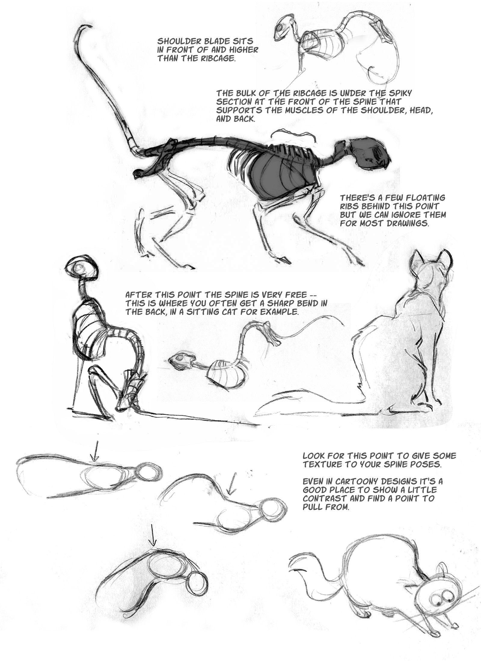 Resultado de imagem para cats anatomy | animales | Pinterest ...