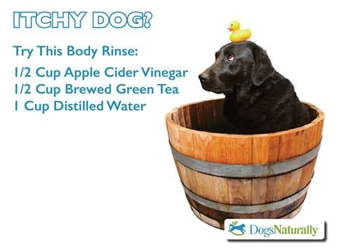This body rinse can be useful to restore skin pH, soothe itchy skin, calm rashes and welts, and has some added benefits for keeping biting flies, fleas and gnats at bay.   Mix the following ingredients together in a bottle/jar with cap and shake well before use:  Apple Cider Vinegar: 1/2 cup  Brewed Green Tea (cooled): 1/2 cup  Distilled Water: 1 cup  Apply to clean skin and coat, massage, rinse, pat dry.
