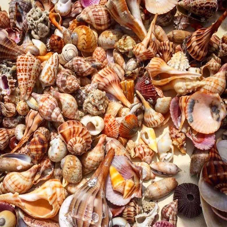 Shelling Tours in Marco Island naples &10,000 Islands, Family Fishing Fun!