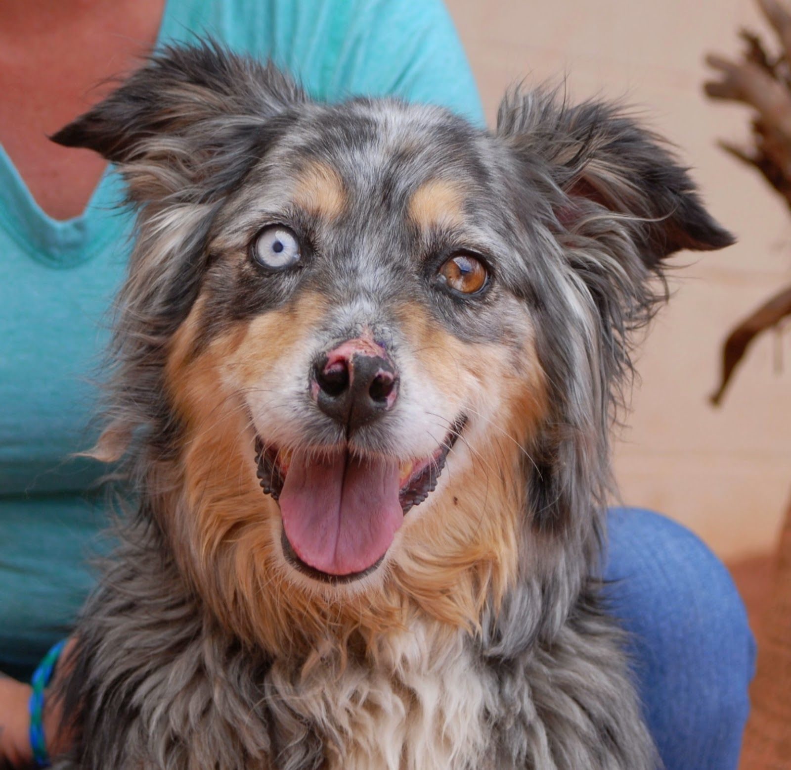 Nevada SPCA Animal Rescue Animal rescue, Animals