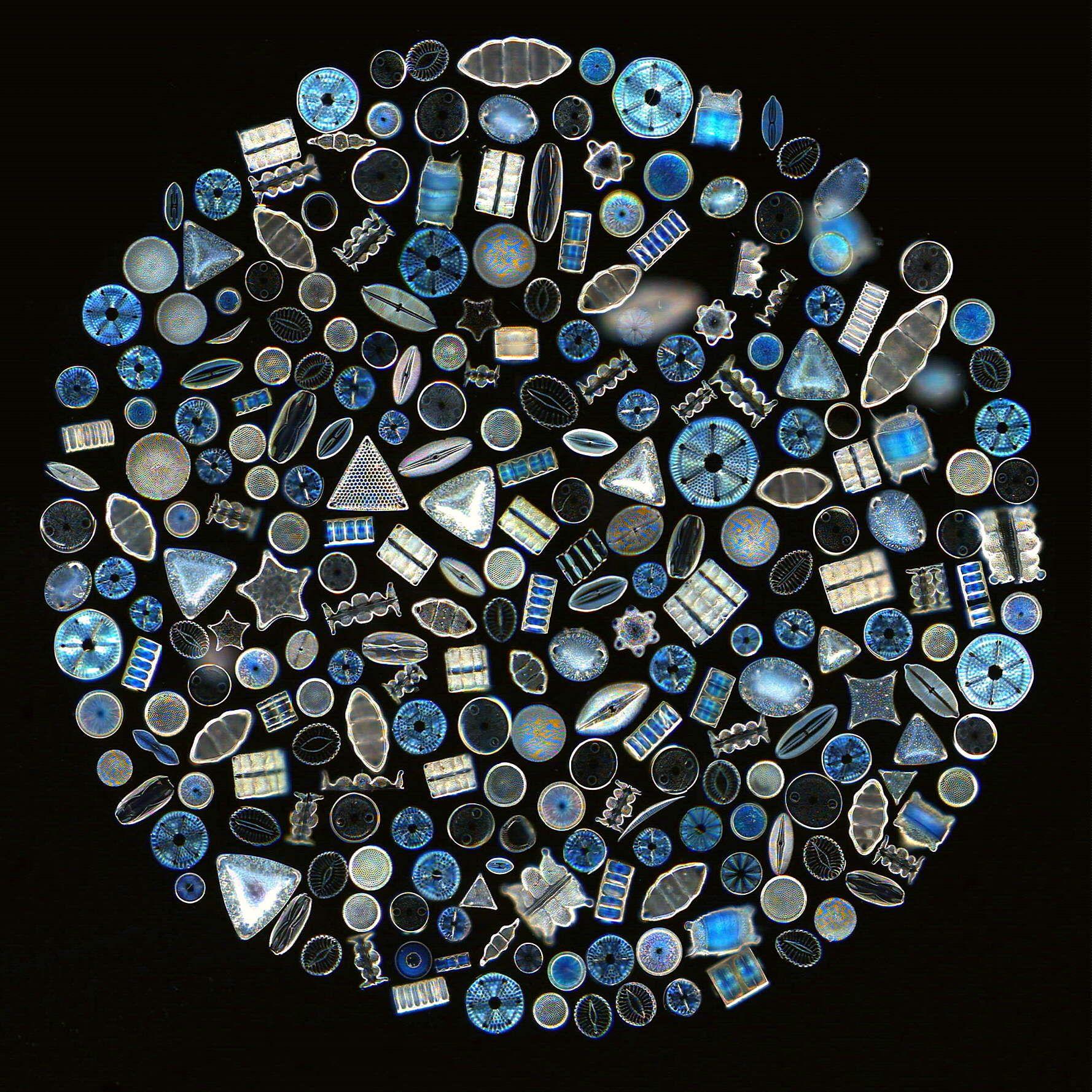 Nano Silica Diatoms Nualgi Aquarium Diatom Microscopic Microscopic Photography [ 1778 x 1778 Pixel ]