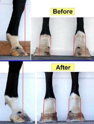 EponaShoe leg and hoof conformation