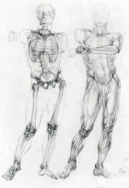 Pin de Pato Rodriguezuribe en School hacks   Pinterest   Anatomía ...
