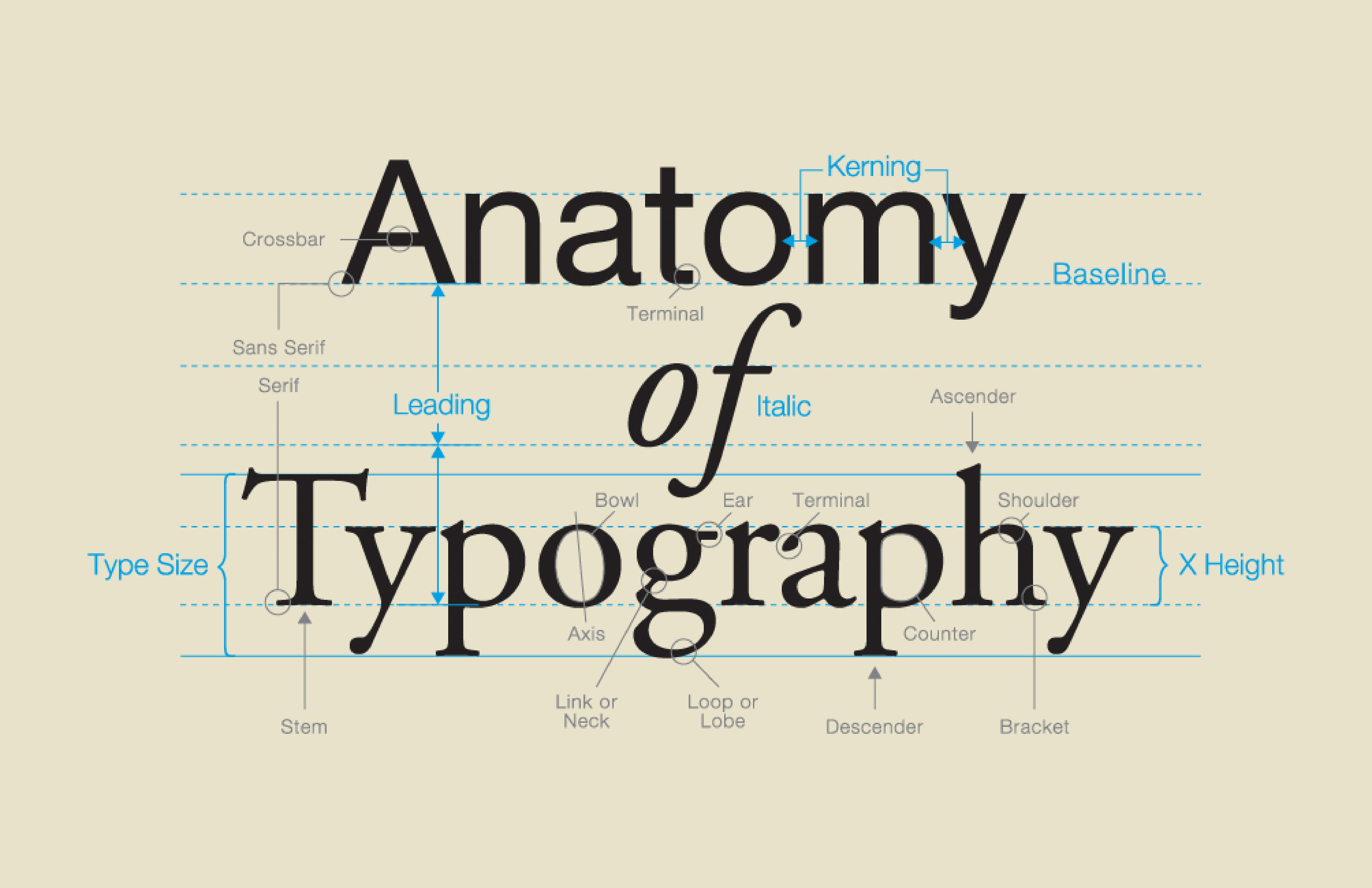 The Anatomy of Type   Anatomy, Type anatomy and Typography