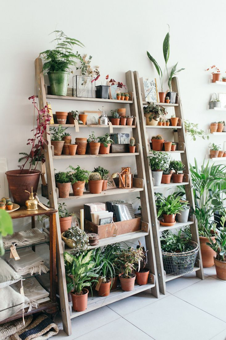 Object of Desire: Wooden Ladder Bookshelf for Plants