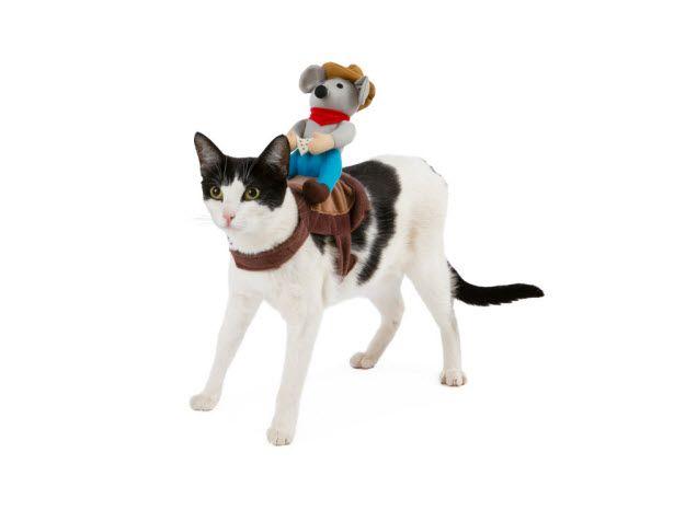 Grreat Choice Pet Halloween Mouse Rider Cat Costume 649 Plus