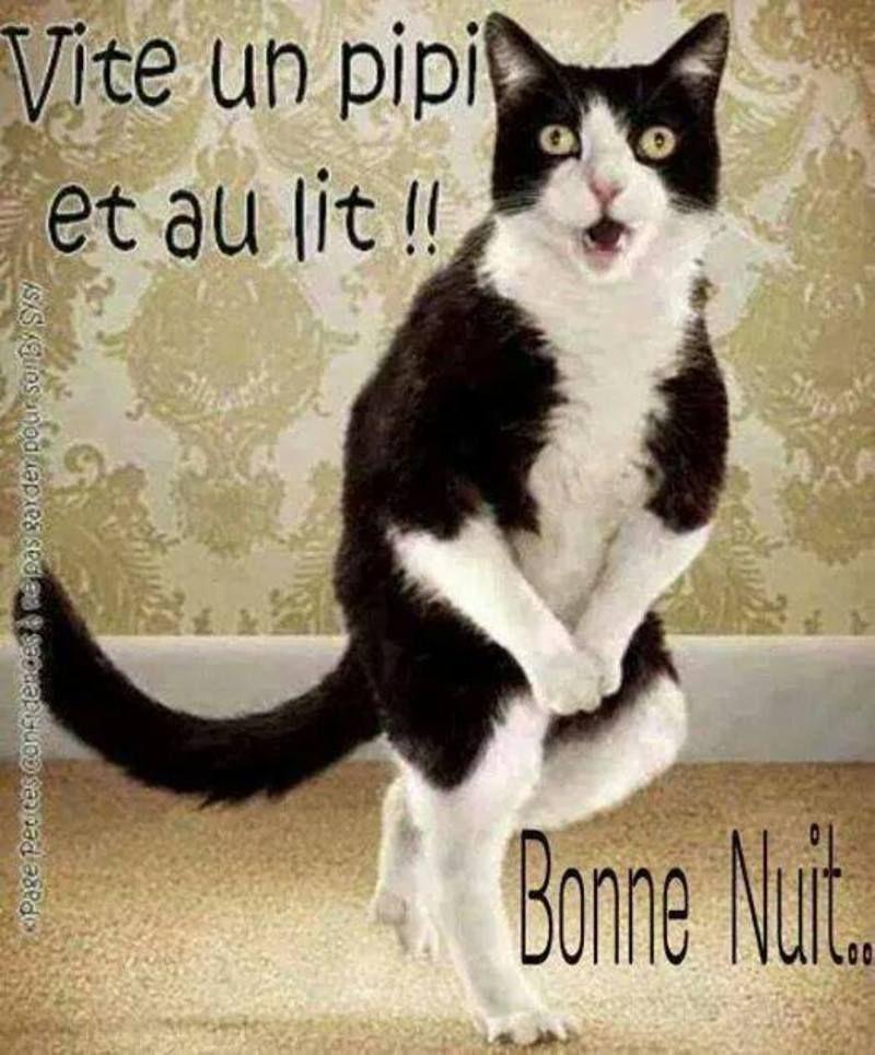 Accueil Des Justacotins Discussion Page 570 Bonne Nuit Image Bonne Nuit Image Bonne Nuit Drole