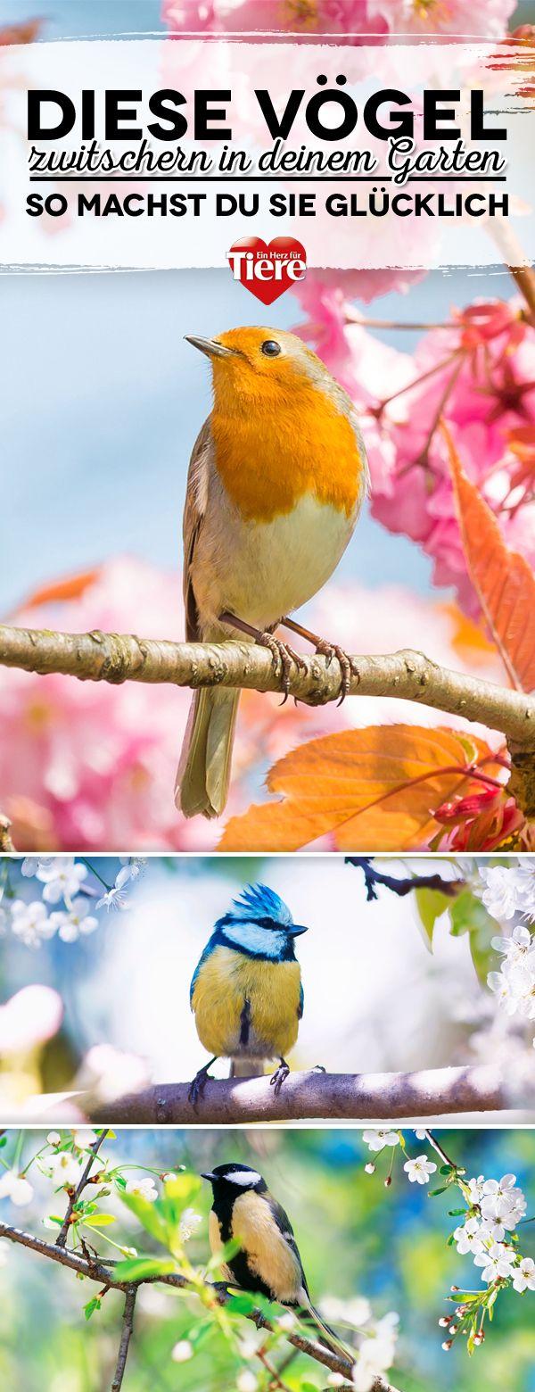 Diese Vogel Zwitschern In Deinem Garten Vogel Im Garten Vogelbad Garten Garten
