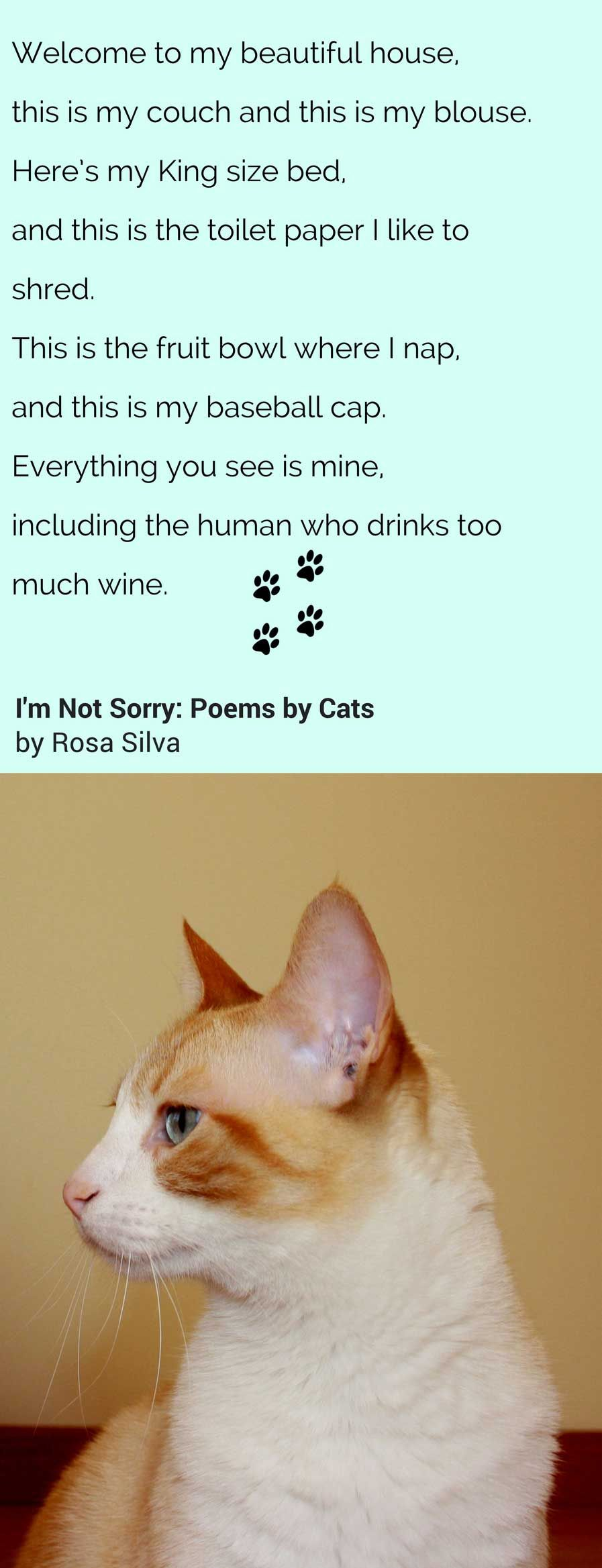 I M Not Sorry Poems By Cats Cat Poems Funny Cat Photos Baby Animals Pictures